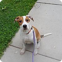 Adopt A Pet :: Sheldon - Lakeville, MN