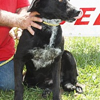 Labrador Retriever Mix Dog for adoption in Grayson, Louisiana - Kate