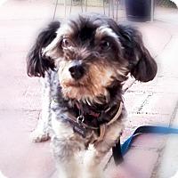 Adopt A Pet :: Steve - Monrovia, CA