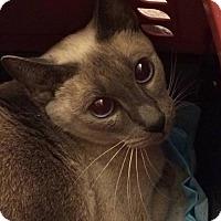 Adopt A Pet :: Harry-Etta - Hamilton, ON