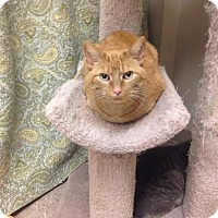 Adopt A Pet :: Stellar - Byron Center, MI