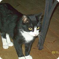 Adopt A Pet :: Mouse - Mexia, TX