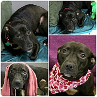 Adopt A Pet :: Xena - Forked River, NJ