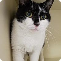 Adopt A Pet :: Lulu - Elyria, OH