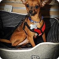 Adopt A Pet :: Elvis - N. Babylon, NY