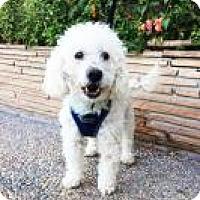 Adopt A Pet :: Fozzie - Santa Cruz, CA
