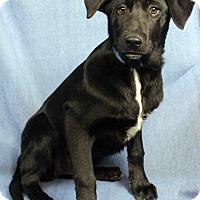 Adopt A Pet :: Valery - Westminster, CO