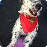 Adopt A Pet :: TRISTAN - Mission Viejo, CA