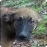 Adopt A Pet :: Oakmont - Plainfield, CT