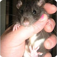 Adopt A Pet :: Berkley - Cincinnati, OH