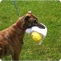 Adopt A Pet :: Twister (Some Twister) - Chagrin Falls, OH