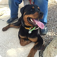 Adopt A Pet :: Slim - Gilbert, AZ