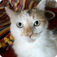 Adopt A Pet :: Callie - Chicago, IL