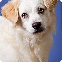 Adopt A Pet :: Toby - pending -DRD program - Owensboro, KY