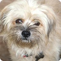 Adopt A Pet :: River - MEET ME - Norwalk, CT