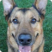 Adopt A Pet :: Lemme - Wayland, MA