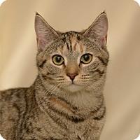Adopt A Pet :: Paris - Shelby, NC