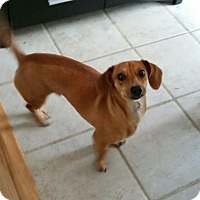 Adopt A Pet :: COOPER - Jackson, NJ