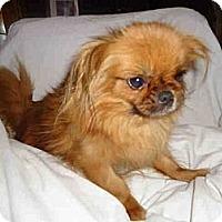 Adopt A Pet :: Tinkerbell - Vansant, VA