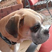 Adopt A Pet :: Rocco - Sunderland, MA