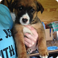 Adopt A Pet :: Brady - Morgantown, WV