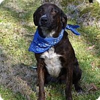 Adopt A Pet :: Charlee - Mocksville, NC