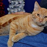 Adopt A Pet :: Clementine - Lenexa, KS