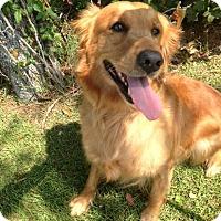 Adopt A Pet :: Fiona - Murrells Inlet, SC