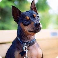 Adopt A Pet :: Rin Tin Tin - Pitt Meadows, BC