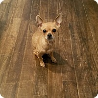 Adopt A Pet :: Nina - Greensboro, GA