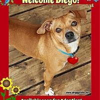 Adopt A Pet :: Diego - Warkworth, ON