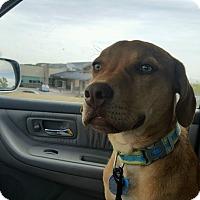 Adopt A Pet :: T-BONE - Severance, CO