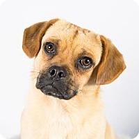Adopt A Pet :: Cleveland - St. Louis Park, MN