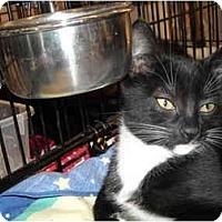 Adopt A Pet :: Ellie - Riverside, RI