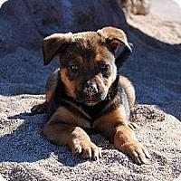 Adopt A Pet :: Jingle - Phoenix, AZ