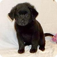 Adopt A Pet :: Jilly - South Jersey, NJ
