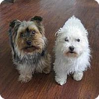 Adopt A Pet :: Odie - Hancock, MI