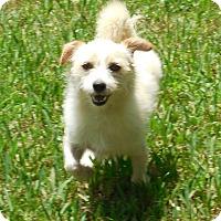 Adopt A Pet :: JayJay - Ormond Beach, FL