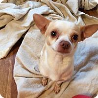 Adopt A Pet :: Tater - Fort Valley, GA