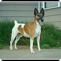 Adopt A Pet :: Kuya - Indian Trail, NC