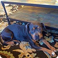 Adopt A Pet :: SOPHIE - Nashville, TN