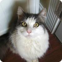 Adopt A Pet :: Bennie - Monroe, NC