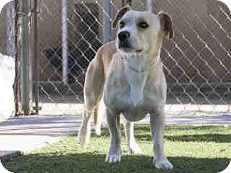 Terrier (Unknown Type, Medium) Mix Dog for adoption in Agoura, California - Grant