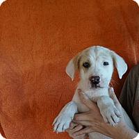 Adopt A Pet :: Maximus - Oviedo, FL