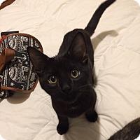 Adopt A Pet :: Milo (pending) - San Francisco, CA