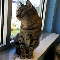Adopt A Pet :: NORMAN - Canfield, OH