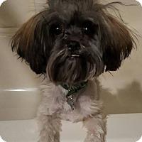 Adopt A Pet :: Vada - Alpharetta, GA
