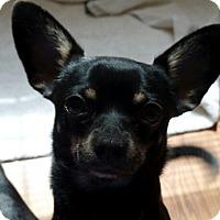 Adopt A Pet :: Roscoe - Great Falls, VA