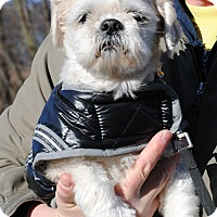 Adopt A Pet :: MAXINE - Linden, NJ