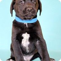 Adopt A Pet :: Ham - Waldorf, MD